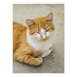 "Sleepy cat 6.5"" x 8.75"" invitation card"