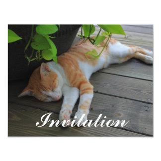 "Sleepy cat 4.25"" x 5.5"" invitation card"