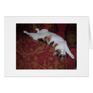 Sleepy Cat Note Card