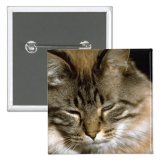 Sleepy Cat Pinback Buttons