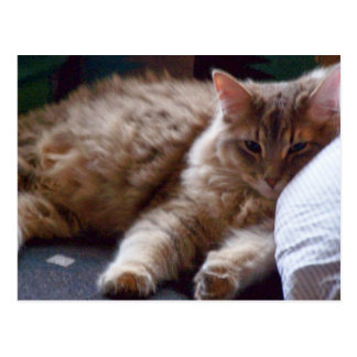 sleepy cat postcard