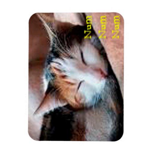 Sleepy Cat Magnets