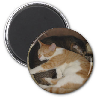 Sleepy Cats Magnet