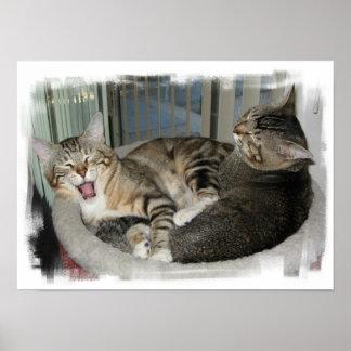 Sleepy Cats Poster