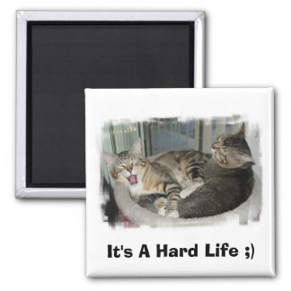 Sleepy Cats Square Magnet