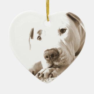 sleepy friendly white pitbull hate deed not breed ceramic ornament