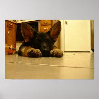 Sleepy German Puppy Poster