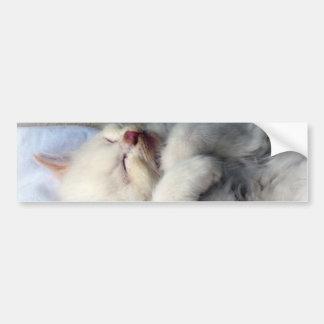 Sleepy Kitten Bumper Sticker