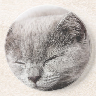 Sleepy Kitten Coaster
