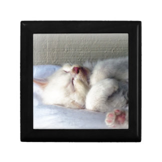Sleepy Kitten Gift Box