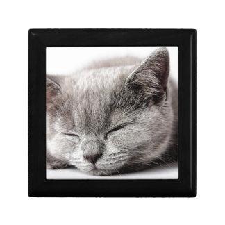 Sleepy Kitten Gift Box