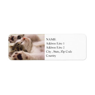 Sleepy Kitten | Paws Stretched Out Return Address Label