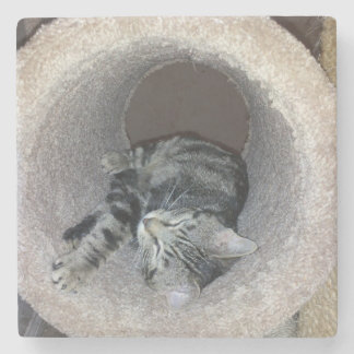 Sleepy Kitty Cat by Shirley Taylor Stone Beverage Coaster