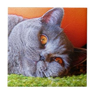 Sleepy Kitty Small Square Tile