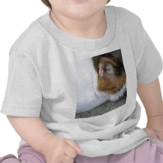 Sleepy Kitty T Shirt
