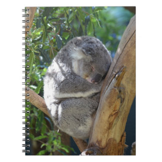 Sleepy Koala Notebooks