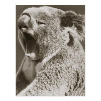 Sleepy Koala Yawning Postcard
