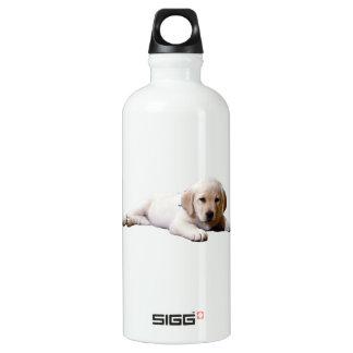Sleepy Lab Water Bottle