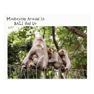 Sleepy Monkeys in Bali Postcard