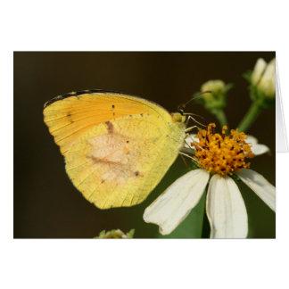 Sleepy Orange Butterfly Note Card