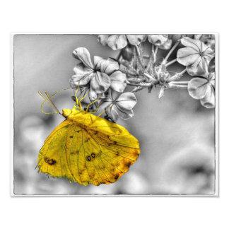 Sleepy Orange Butterfly Pop Photo