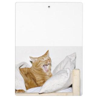 Sleepy orange tabby cat clipboard