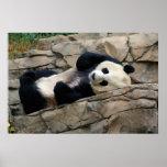 sleepy panda posters