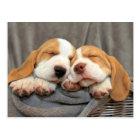 Sleepy Puppies Postcard