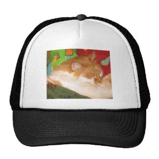 Sleepy Red Cat Hats