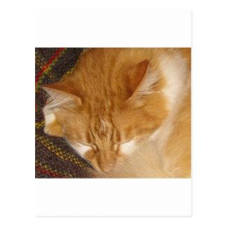 Sleepy Red Cat is finally REALLY sleeping Postcard