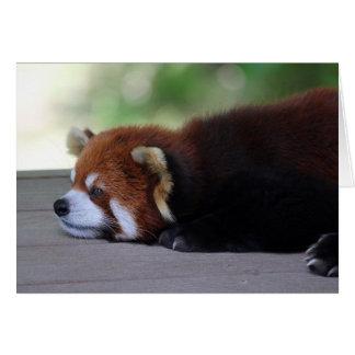 Sleepy Red Panda Photo Card