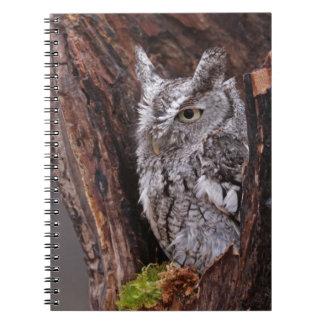 Sleepy Screech Owl Spiral Notebooks