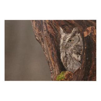 Sleepy Screech Owl Wood Print