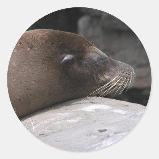 Sleepy Sea Lion Sticker