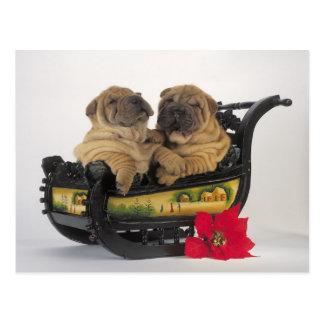 sleepy shar pei dogs in santa's sledge postcard