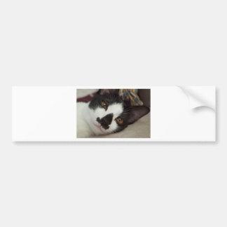 Sleepy Tuxedo Cat Bumper Sticker