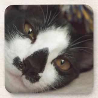 Sleepy Tuxedo Cat Drink Coaster