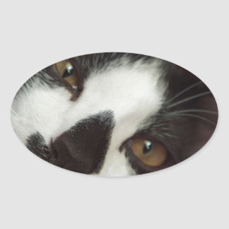 Sleepy Tuxedo Cat Oval Sticker