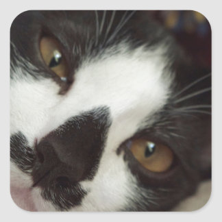 Sleepy Tuxedo Cat Square Sticker