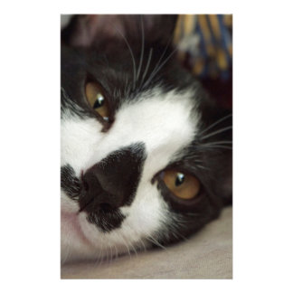 Sleepy Tuxedo Cat Stationery