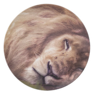 Sleepy white lion plate