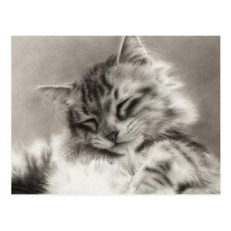 Sleepyhead Maine Coon Cat Postcard