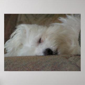 Sleepyhead Poster