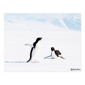 Sliding Adelie Penguin and Friend Postcard