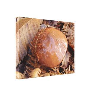 Slippery Jack Mushroom Canvas Print