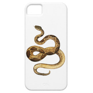 Slithering Expressions iPhone 5 Cases