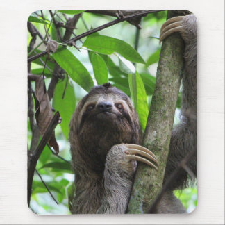 Sloth_20171101_by_JAMFoto Mouse Pad