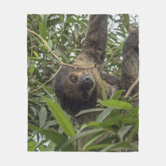 Sloth_20171103_by_JAMFoto Fleece Blanket