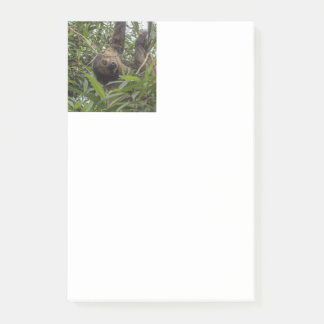 Sloth_20171103_by_JAMFoto Post-it Notes
