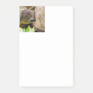 Sloth_20171108_by_JAMFoto Post-it Notes
